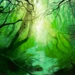 SMO foresta