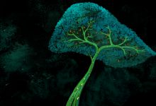 animation, becs, biliarytree, biology, copenhagen, cosimo miorelli, cosimomiorelli, czm, danstem, denmark, digitalpainting, dna, genetics, hepatocytes, illustration, knowledge, live painting, livepainting, liver, lpc, miorelli, multimedia, music, regeneration, research, sci-vi, science, science dissemination, sciencedissemination, scivi, stem cells, stemcell, stemcells, storytelling, superheroes, tree, zebrafish